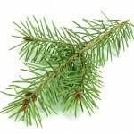 Pine Tree note